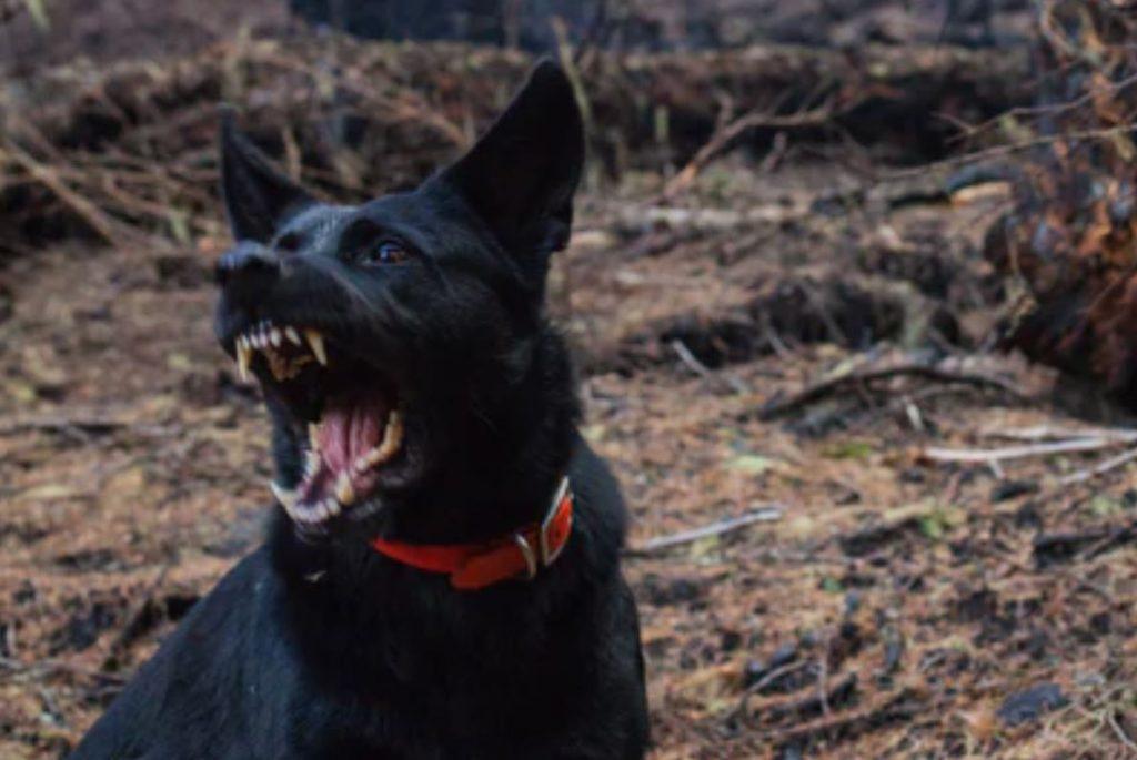 dog-bite