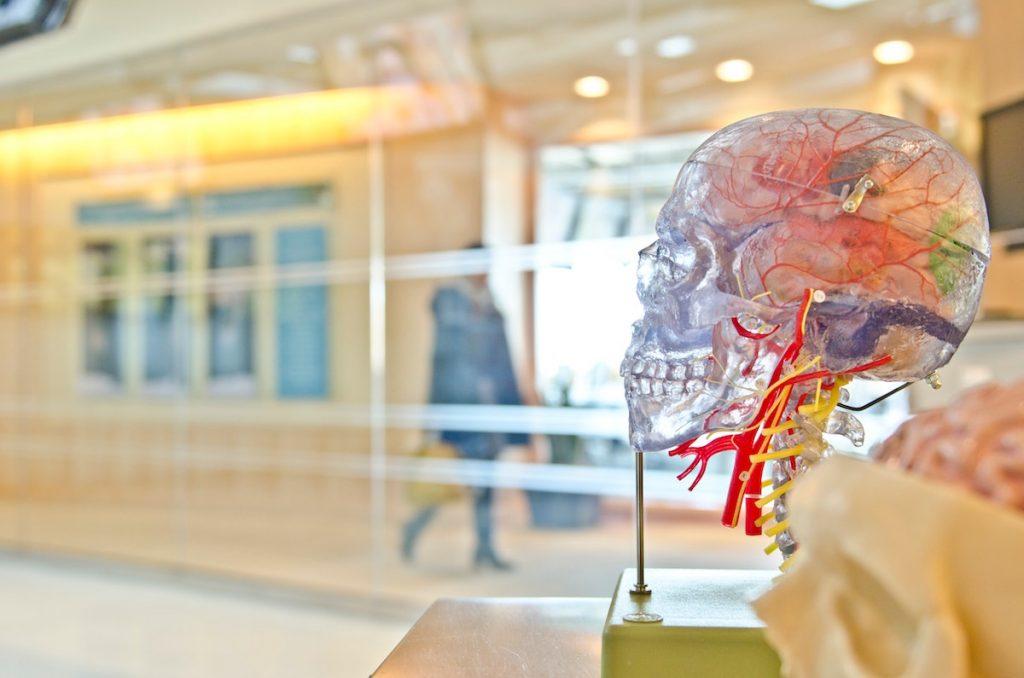 Skull showing nerves